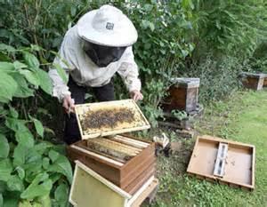 d claration obligatoire des colonies d 39 abeille commune de haux 33. Black Bedroom Furniture Sets. Home Design Ideas