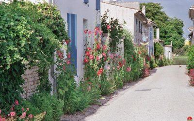 Ma rue en fleurs
