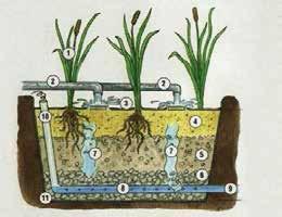 Station d'épuration | Filtre planté de roseaux à écoulement vertical.