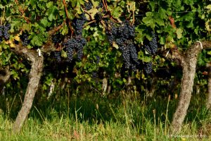 École et viticulture