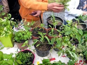 Troc-plantes à la Bibliomédia